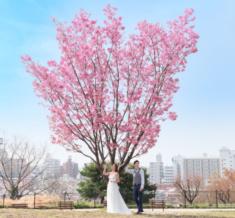 代官山(西郷山公園) 桜フォトウェディング